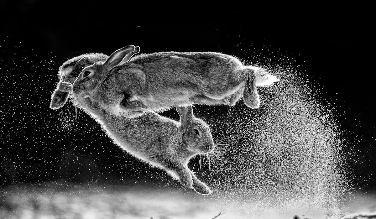 Gesamtsieger: »Jump«
