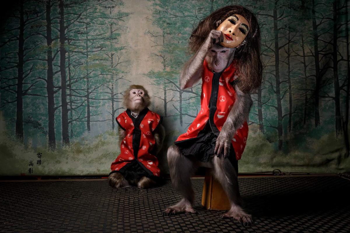 Gesamtsieger: »Des Affen Maske«
