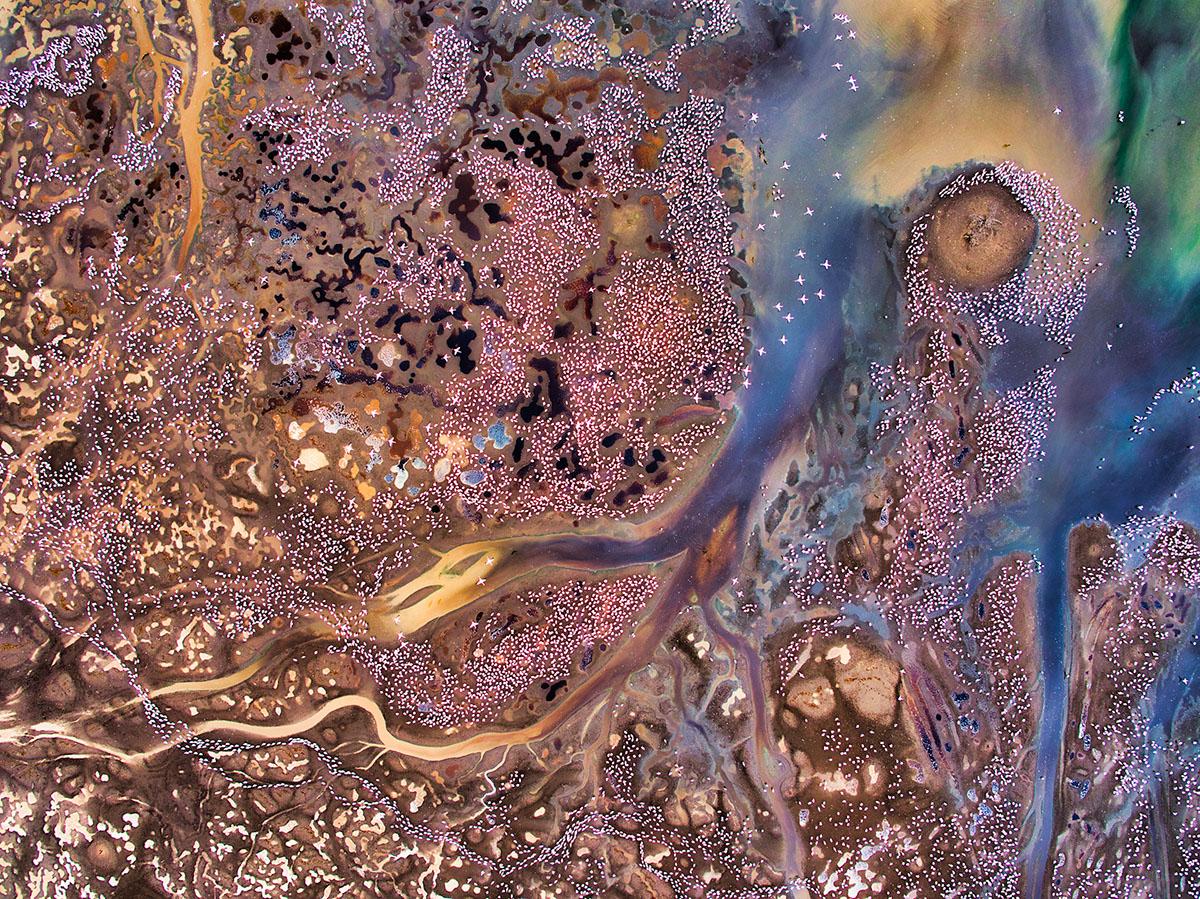 Gesamtsieg »Rainbow City« Am schlammigen Ufer des Lake Bogoria (Kenia) ließ ich meine Drohne hoch über den riesigen Schwärmen von Zwergflamingos (Phoeniconaias minor) fliegen, die dort ihre bevorzugte Nahrung, Cyanobakterien der Gattung Spirulina, aus dem stark alkalischen Wasser filtern. Durch das Ausbleiben der Regenfälle während  der Trockenzeit liegen Mineralien und Salze aus dem vulkanischen Untergrund  in sehr hoher Konzentration vor, so dass sich aus der Luft eine wahre Explosion  satter Farben beobachten lässt. Und das Pink der Flamingos vervollständigte  perfekt die Farbpalette der großen Künstlerin Mutter Erde.